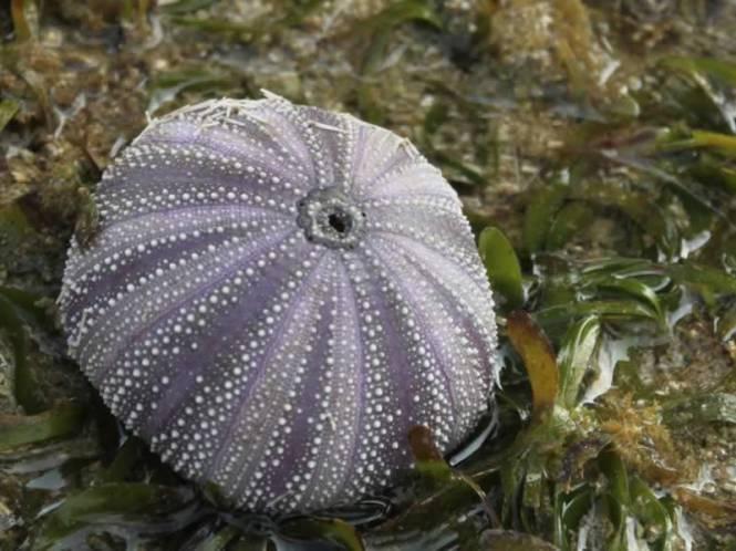 Biota laut di Ujung Genteng