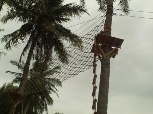 Jaring-jaring pohon