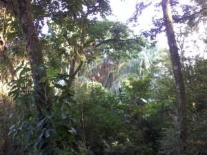 Hutan Baksil