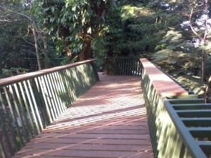 Jembatan Pohon