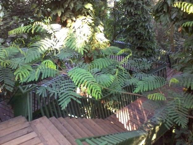 Jembatan Hutan Baksil
