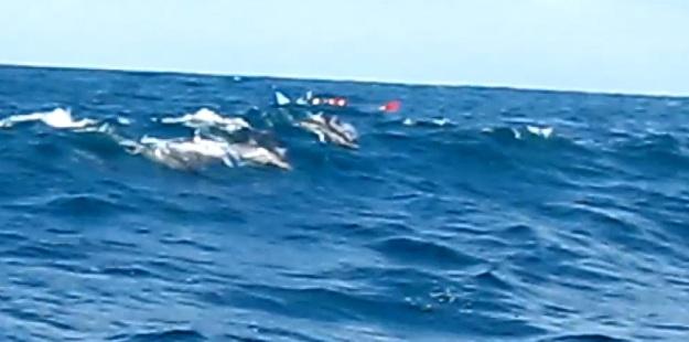 Kelompok lumba-lumba