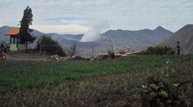 Gunung Bromo terlihat dari ladang penduduk