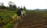 Jalan pulang lewat ladang