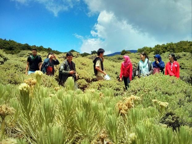 Padang Edelweiss di Tegal Alun