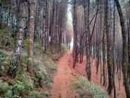 Hutan setelah melewati Moko Daweung
