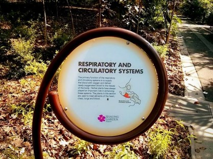 Respiratory and Circulatory Systems Area