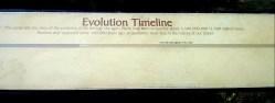 Evolution Timeline