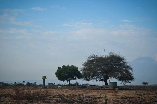 Merak di kubangan (foto oleh Pras)