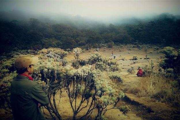 Menatap Lembah Mandalawangi