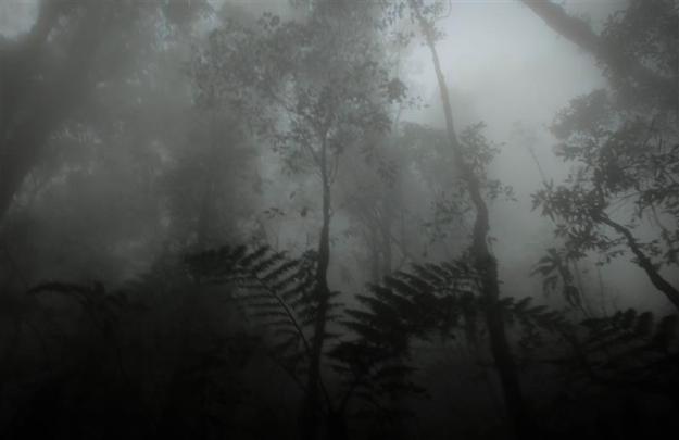 Kabut menyelimuti hutan di jalur Gunung Putri (photo by Ferdian)