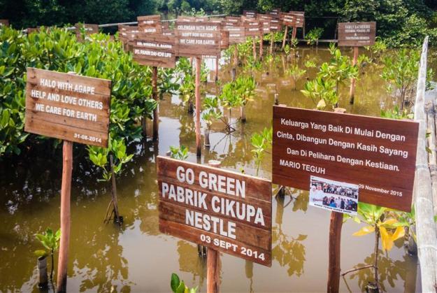 Bibit-bibit pohon bakau sumbangan dari berbagai kalangan