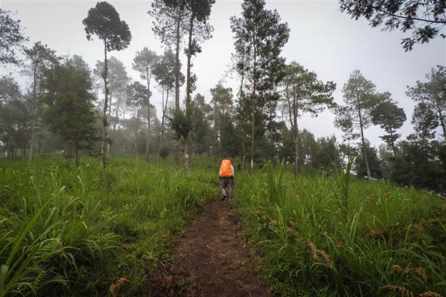 Memasuki kawasan hutan cemara