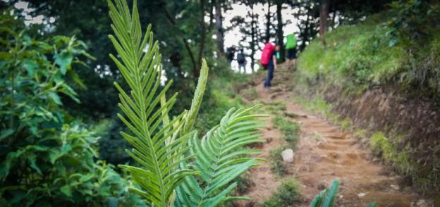 Melewati hutan antara Pos 2-3