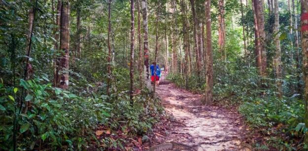 Menembus hutan Gunung Angsi