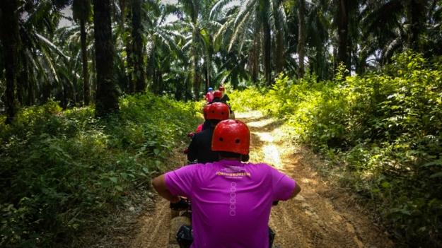 Menembus hutan kelapa sawit