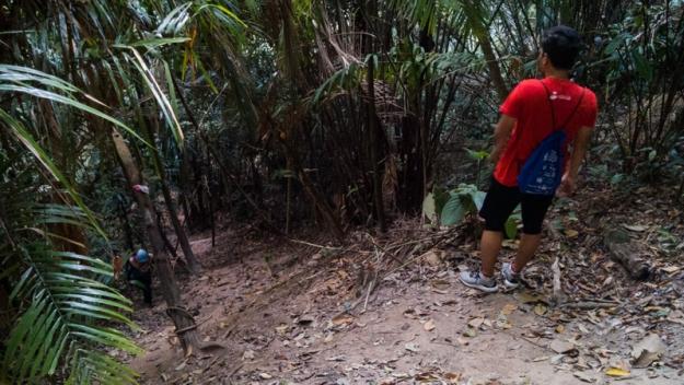 Berjalan menembus hutan